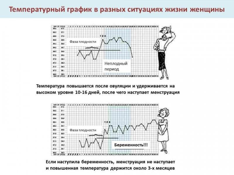 Повышение базальной температуры при наступлении беременности