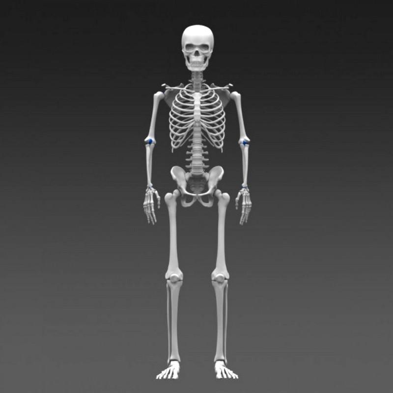 человек скелетов картинки сантиметры